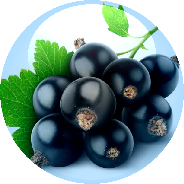 Blackcurrent Seed Oil