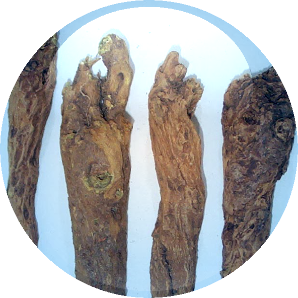 Chinese Saphora Root