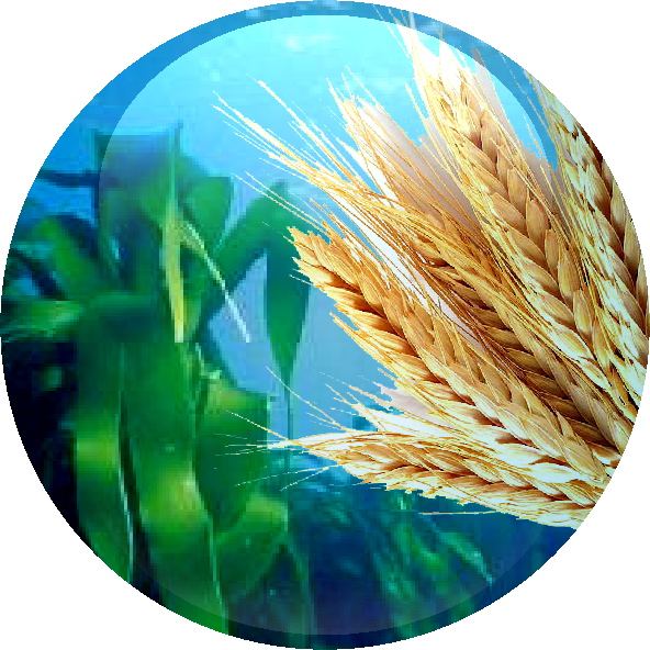 Giant Kelp Extract & Hydrolysed Wheat Protein